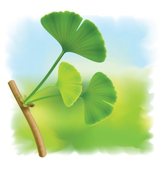 Twig with leaves ginkgo biloba on fullcolor bac vector