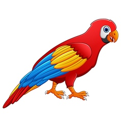 Cute macaw bird cartoon posing vector image
