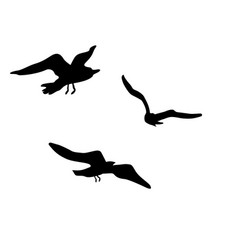 silhouettes of flying seagulls vector image