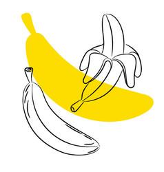 sketch banana fruit vector image vector image