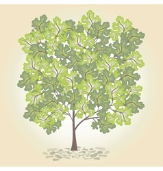 Tree with green leafage vector image