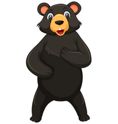 a black bear on white background vector image