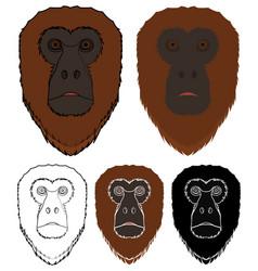 Bugio monkey in front view vector
