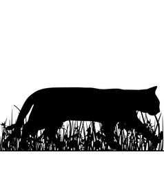 Cat in the meadow vector