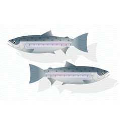 Fresh salmon fish isolated on white background vector
