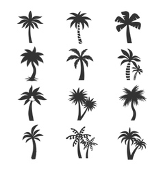 Tropical palm tree icons set silhouettes vector