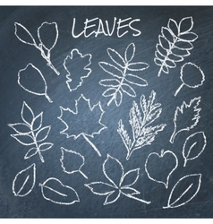 Collection of chalk leaves vector image vector image