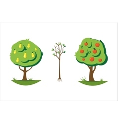 Cartoon pear and apple tree vector