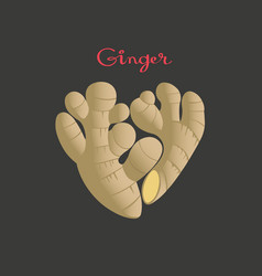 ginger root in a heart shape on black vector image