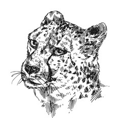 Hand-drawn cheetah vector
