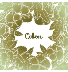 graphic cotton plants vector image vector image