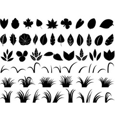 Leafs and grass vector image vector image