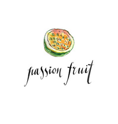 watercolor passion fruit vector image vector image