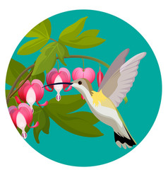 Bleeding heart flowers and hummingbird isolated vector
