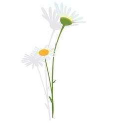 Chamomile flower vector