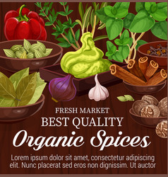 herbs spices and vegetables vector image