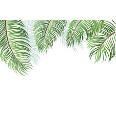 Palm leaves isolated on white background vector
