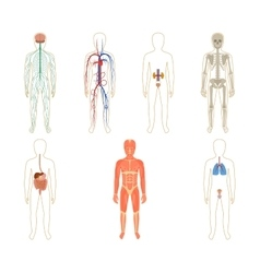 Set of human organs and systems vector image vector image