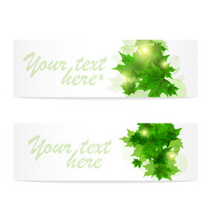 banner of fresh green leaves of maple sunny vector image