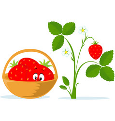 strawberry cartoon in basket and strawberry plant vector image