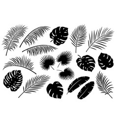 tropical palm leaves set vector image