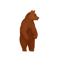 wild forest bear standing on two hind legs large vector image