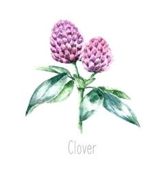 Watercolor clover herb vector image vector image