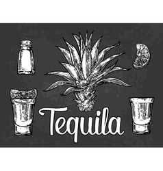 Glass botlle of tequila cactus salt lime vector image