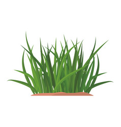 bunches of green grass on an earthen mound vector image