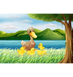 Five ducks at the riverbank vector image