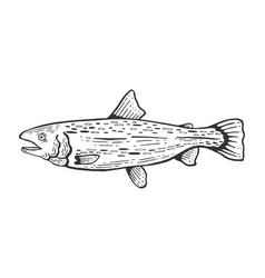 salmon fish sketch engraving vector image