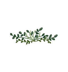 twigs with green leaves natural design element vector image
