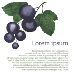 Watercolor blackcurrant vector