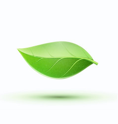 Eco concept icon vector
