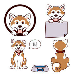 Akita dog icon vector