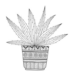 Cactus succulent black and white vector