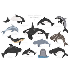 dolphins set marine mammals collection cartoon vector image
