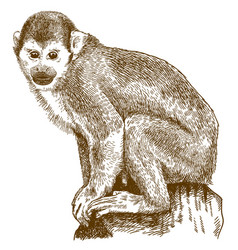 Engraving of squirrel monkey vector