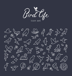 flat birds icon set in thin line style vector image
