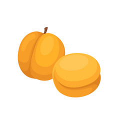 flat design of two whole apricots tasty vector image