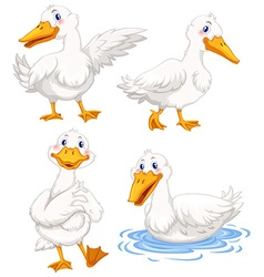 Four ducks in different poses vector image