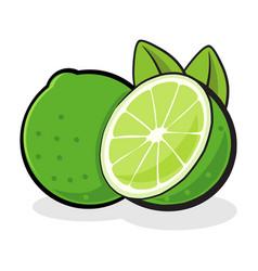 Fresh lime fruit vector