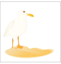 Seagull in sand island isolated photo realistic vector