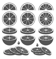 Set lemon lime orange or grapefruit slices vector