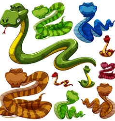 Set of different types of snakes vector image
