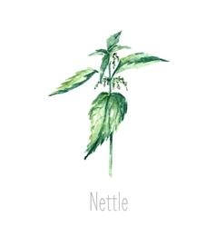 Watercolor nettle herbs vector image vector image