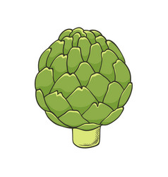 hand drawn icon of green fresh artichoke vector image