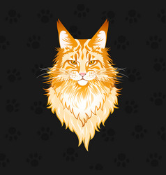 Portrait a red maine coon cat vector