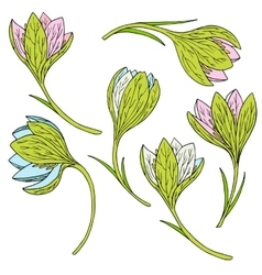 Set of snowdrops vector