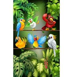 Wild birds standing on the branch vector